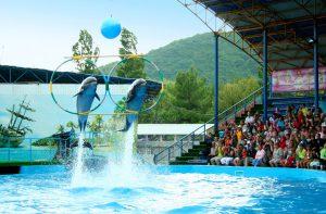 Геленжикский дельфинарий